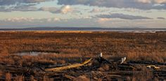 i stand on guard for thee owls at Boundry Bay - Panorama of owls at Boundry Bay Stand By Me, Owls, Wildlife, Mountains, Nature, Prints, Travel, Stay With Me, Naturaleza