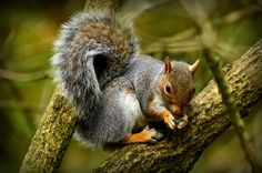 Photo listed in Animal Shot taken with NIKON 64 shares, 106 likes and 784 views. Nikon D5100, Squirrel, Owl, Bird, Photography, Animals, Animales, Squirrels, Animaux