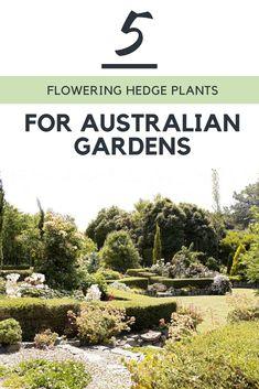 Australian House & Garden's Garden editor Helen Young nominates her top five flowering hedges.