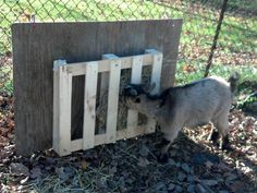 Cheap/Free Hay feeder idea - Goat Management