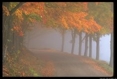 morning mist - Google Search