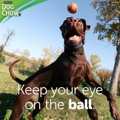 Dogs sure can teach us a thing or two about focus!