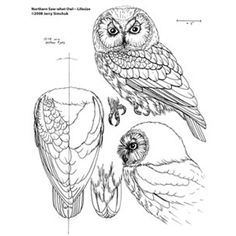 Wood carving pattern of a Owl detail