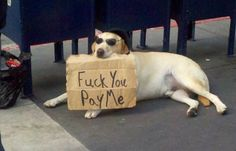 This dog knows a thing or two about being homeless