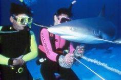 Feeding Shark @Stuart Cove's Shark Feeder Adventure