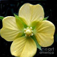 Yellow Hawaiin Flower