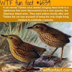 WTF Facts - Page 527 of 1301 - Funny, interesting, and weird facts Wtf Fun Facts, True Facts, Funny Facts, The More You Know, Good To Know, Just For You, Animal Facts, Cat Facts, Facts You Didnt Know