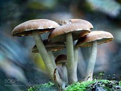 Mushrooms by dannety. @go4fotos