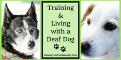 Deaf Dogs and How to Train a Deaf Dog. Training deaf dogs isn't as hard as you may think, Deaf Dog Training, Positive Dog Training, Dog Training Tips, Sign Language For Deaf, Attention Seeking Behavior, Verbal Cues, Dogs And Puppies, Doggies, Your Pet