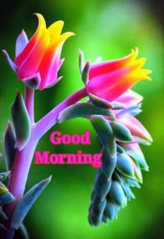 Good Morning Image Quotes, Good Morning Beautiful Images, Good Morning Picture, Morning Pictures, Morning Quotes, Morning Pics, Morning Messages, Beautiful Pictures, Good Morning Tuesday