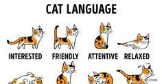 How toFind aCommon Language With Your Cat