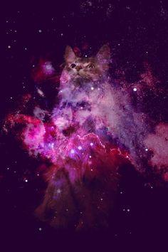 fab ciraolo: Ilustracion ... inter-galactic-cats