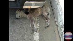 Amazing Thailand. beautiful, funny dogs in Pattaya / Таиланд. Эти красив...