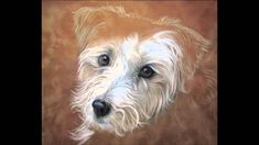 Pet Portrait progress (time lapse) by Colette Theriault-Olive Pet Portraits, Art Lessons, Painting & Drawing, Pets, Drawings, Color Art Lessons, Sketches, Drawing, Art Education