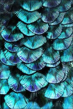 Feathers - natural pattern.