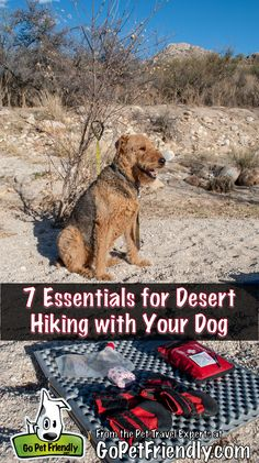 Planning to do some desert hiking with your dog? Here are the 7 essentials we've found. Dog Hiking Gear, Hiking Backpack, Camping Gear, Hiking Trails, Dog Enrichment, Dog Water Bowls, Pet Travel, Dog Costumes, Back To Nature