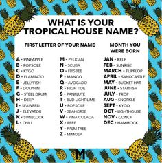 We Made You A Tropical House Name Generator - Magnetic Magazine