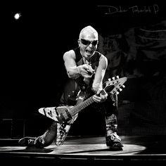 Scorpions - Tous droits réservés à Didier Taberlet