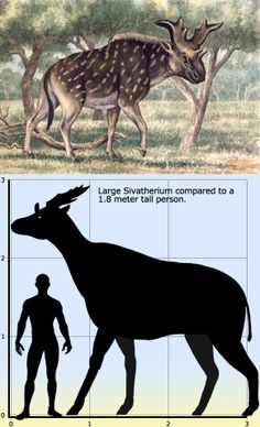 Sivatherium ('Shiva's beast)' is an extinct genus of giraffid that ranged throughout Africa to the Indian Subcontinent. It may have become extinct as recently as 8,000 years ago, as depictions that greatly resemble it are known from ancient rock paintings in the Sahara desert. http://en.wikipedia.org/wiki/Sivatherium