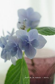 夏のお花の画像:ecru-diary
