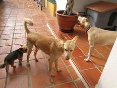 Ratos en casa con Monty, Avanti y Chico 10/17