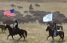 Check out our photos of the Custer State Park Buffalo Roundup # Custer #roundup #SouthDakota #USA