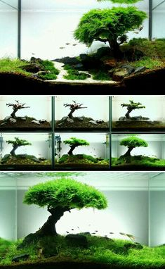 DIY Aquarium Dekorationen Themen Aquascaping Süßwasser Dekor Ideen kleine Aqu Best Picture For red Tropical fish For Your Taste You … Diy Aquarium, Planted Aquarium, Aquarium Terrarium, Aquarium Design, Aquarium Fish Tank, Aquarium Garden, Betta Fish Tank, Garden Terrarium, Fish Tank Terrarium