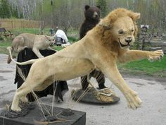 weird taxidermy | The king of beasts. Undeniably.