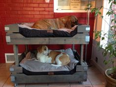 Pallet Dog Bunk Beds featuring Baxter and Lucy