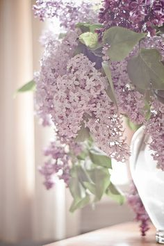 Lilacs. My mother has a HUGE bush of this in her front yard! I LOVE the smell that fills her house when she put them in vases! NEED ONE FOR THIS SPRING!!!