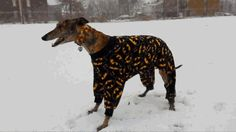 Happiness Is A Greyhound In Batman Pajamas, Frolicking In The Snow