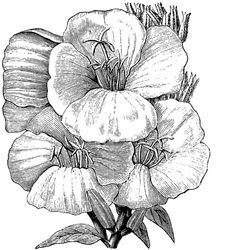 **FREE ViNTaGE DiGiTaL STaMPS**: Free Vintage Digital Stamp - Primrose Flower