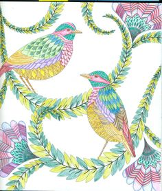 Millie Marotta Coloring Pages 2 birds