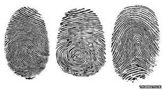 The tree main fingerprint types: the loop, the whorl and the arch. Types Of Fingerprints, Textures Patterns, Print Patterns, Organic Patterns, The Devil's Advocate, Wood Router, Wood Lathe, Cnc Router, Tatoo