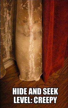 Hide-and-Seek kitten.