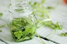 Freezing and Preserving Herbs Steps