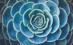 101 Color Combinations to Inspire Your Next Design – Succulent Blue Green Color Palette Green Colour Palette, Green Colors, Colours, Blue Green, Monochromatic Color Scheme, Couleur Hexadecimal, Rainy Day Images, Fixer Up, Color Schemes Design