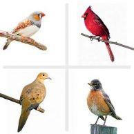 Make Your Bird Feeder a Success