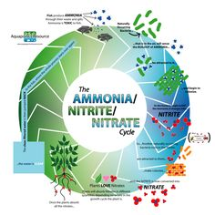 In setting up aquariums or your Aquaponics System, its important to understand the Ammonia/Nitrite/Nitrate Cycle.  Visit www.aquaponicsresource.com to learn more!