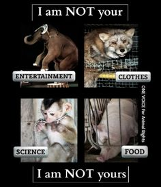vegan: animals are not here to be exploited.