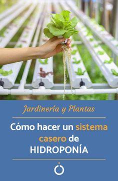 Descubre la hidroponía y aprende a cultivar tus plantas sin suelo en el siguiente artículo de unCOMO. #plantas #jardineria #hidroponía