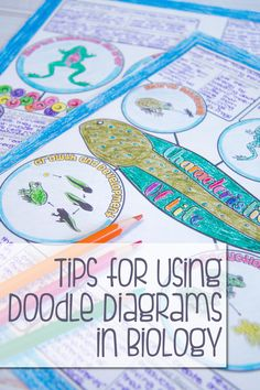 This blog post has lots of tips for using doodle style pages for your students to take notes on in your science classroom. Also has a free download of these characteristics of living things set.