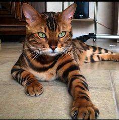 Very beautiful cat
