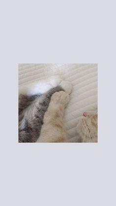 Source by videos wallpaper cat cat memes cat videos cat memes cat quotes cats cats pictures cats videos Cartoon Wallpaper, Cute Cat Wallpaper, Soft Wallpaper, Cute Disney Wallpaper, Aesthetic Pastel Wallpaper, Locked Wallpaper, Kawaii Wallpaper, Tumblr Wallpaper, Animal Wallpaper