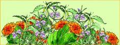 Kesäluonto Lääkitsee - Frantsila. Luonto antaa kesäisten villivihannesten ja talven varalle kerättävien yrttiteeainesten lisäksi apua myös kesän pikkuvaivoihin. Myös kotiapteekki kannattaa varustaa ajantasalle luonnon yrttituottein!  Haavat ja loukkaantumiset: Ulkoleikeissä syntyvien haavojen ja pintanaarmujen ikivanha ykkösrohto on pihoilla villinä kasvava... Varanasi, Plants, Plant, Planets