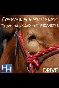 love this quote. Even though I will probably never ride a bull haha