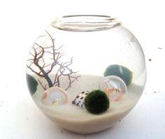 Your place to buy and sell all things handmade Marimo Moss Ball Terrarium, Terrarium Bowls, Terrariums, Terrarium Ideas, Homework Station Diy, Shrimp Tank, Japanese Water, Moss Garden, Water Plants