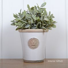 Kew Long Tom Medium Plant Pot in Bone from the Royal Botanic Gardens Collection of Planters for Flowers and Plants Kew Gardens, Botanical Gardens, Embossed Seal, Small Potted Plants, She Sheds, Terracotta Pots, Garden Pots, Planter Pots, Balcony Ideas