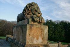 Sleeping lion Hamilton Scotland