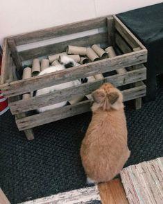 Brak dostępnego opisu zdjęcia. Bunny Cages, Rabbit Cages, House Rabbit, Rabbit Toys, Pet Rabbit, Bunny Play Pen, Guinea Pig Toys, Guinea Pigs, Diy Bunny Toys